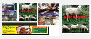 jual kambing aqiqah 2016 jakarta selatan